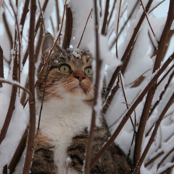 Фото дерущихся котов